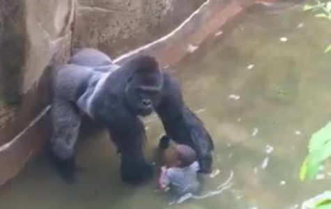 Help from Harambe: Where Do Babies Come From?